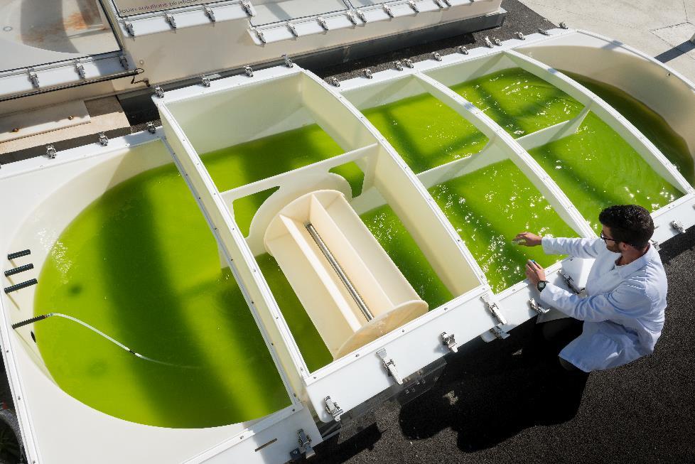Culture de microalgues en raceway (© Jean-Claude MOSCHETTI/AlgoSolis/CNRS Photothèque